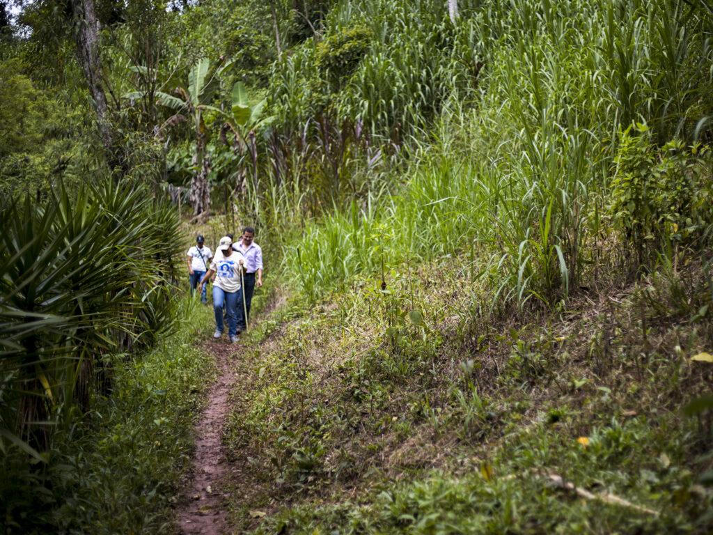 Tre personer vandrar på en stig i ett skogsområde. Runtom stigen är det högt gräs och höga buskar.