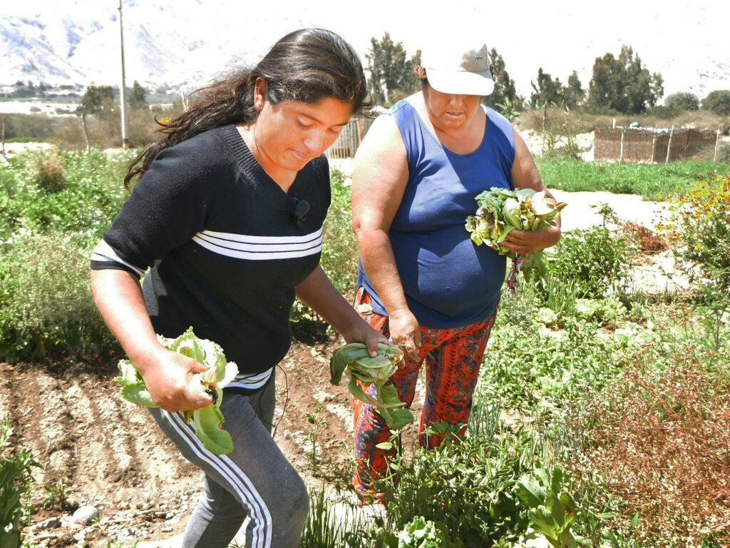 Två kvinnor står i ett fält med odlingar. I handen har de olika grödor.