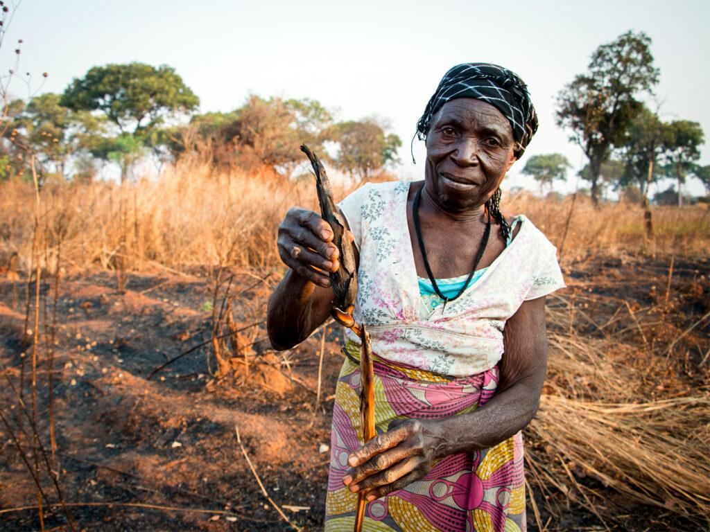 Enna Chembe från nordvästra Zambia visar upp en majskolv