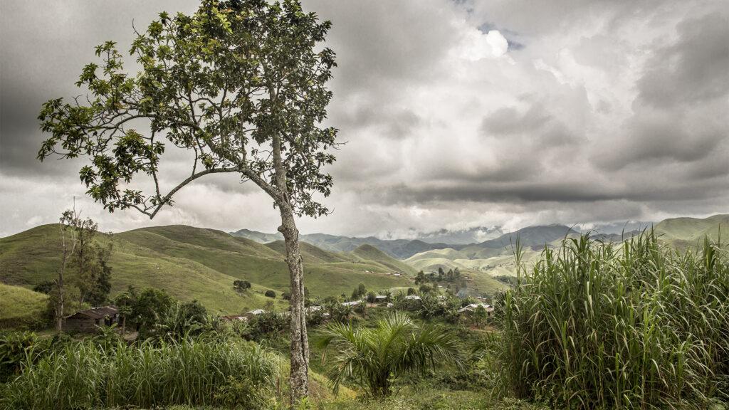 Böljande fält i Kivuregionen i DRC