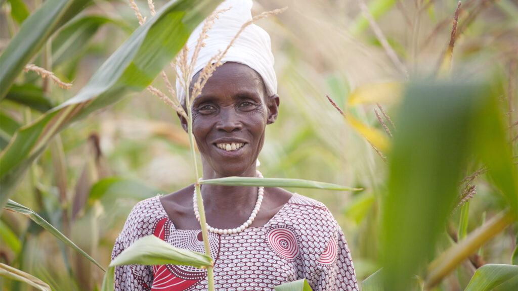 leende kvinna står mitt i sin majsodling