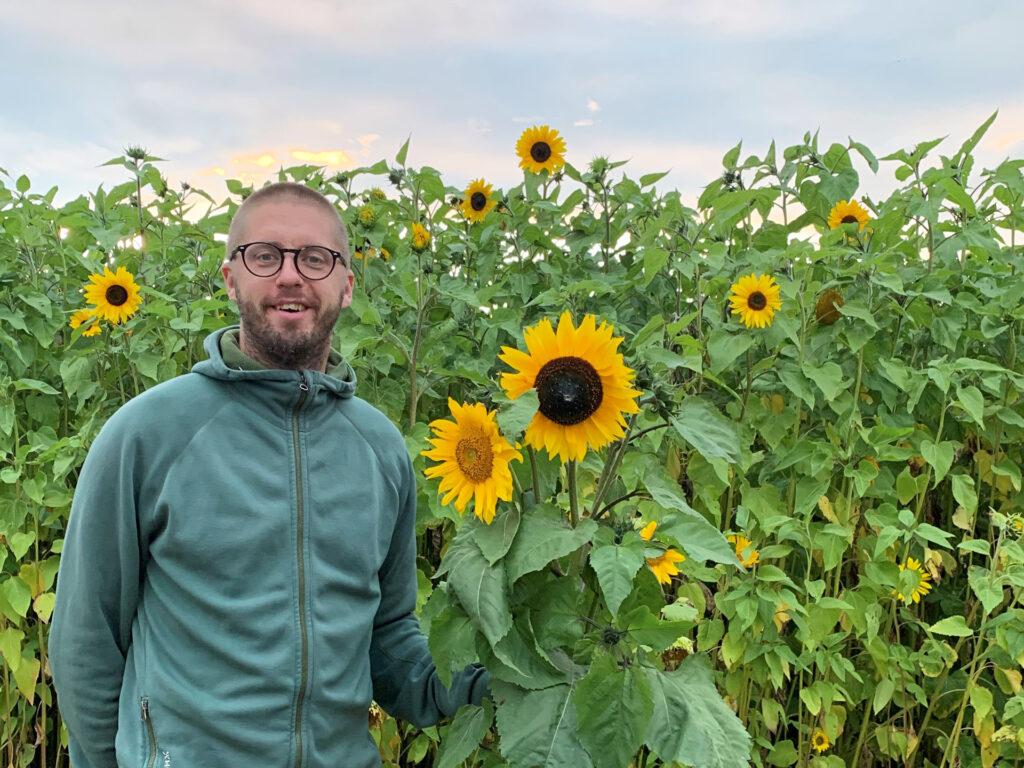 En man står vid solrosor