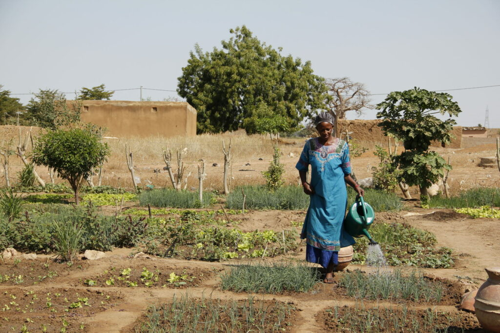 A person watering plants in a garden.