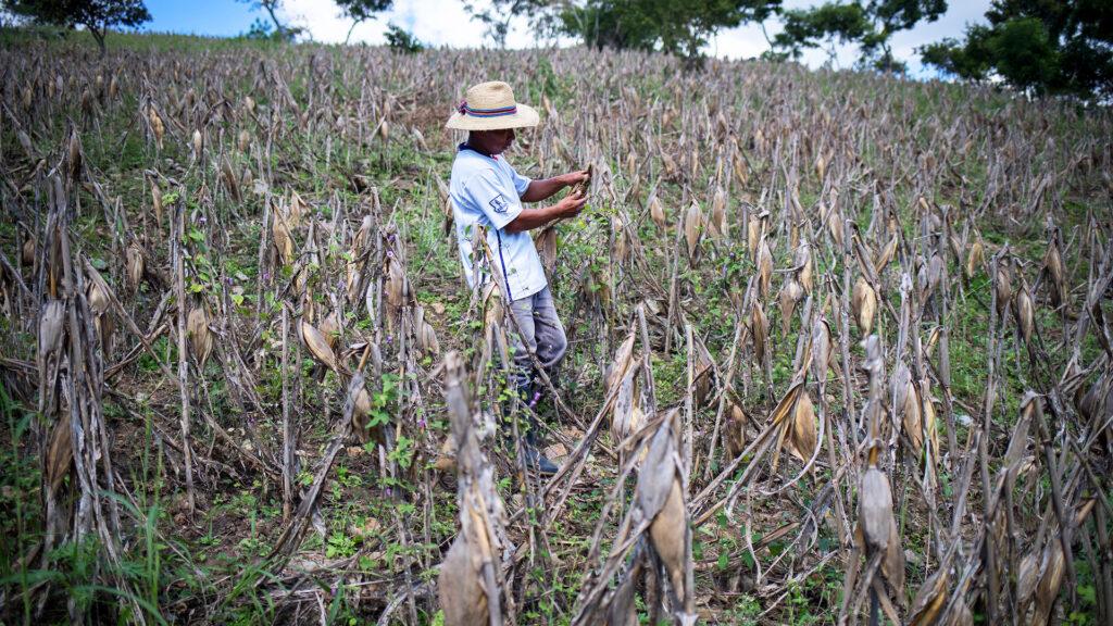 Man in field in Honduras