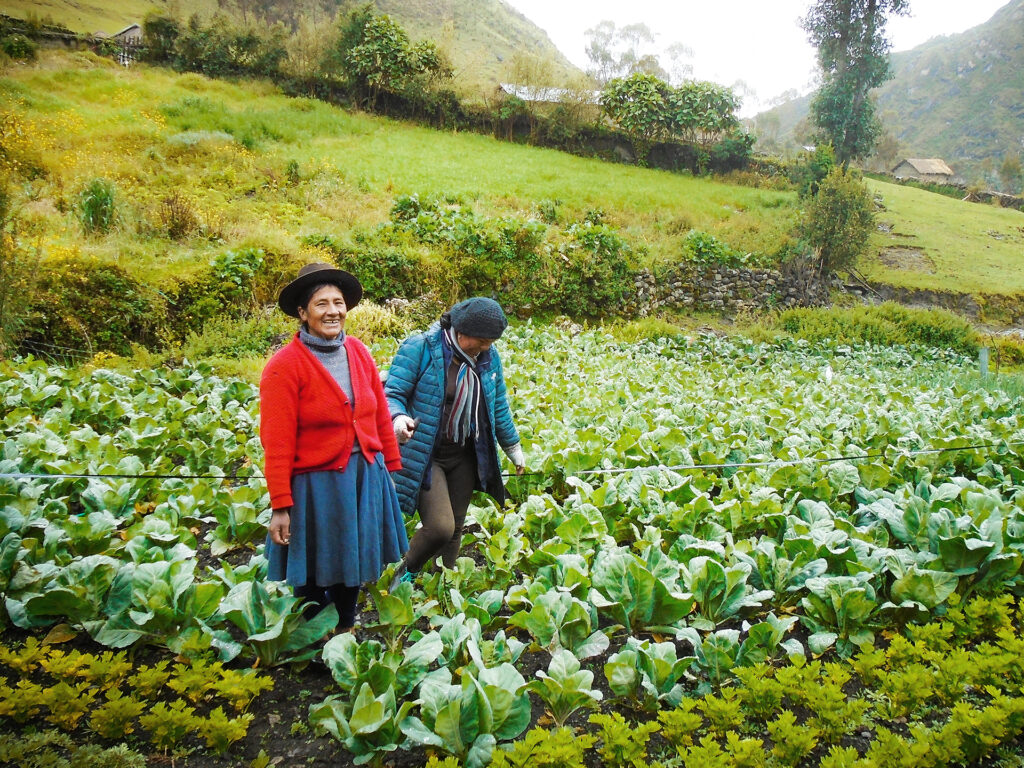 Two Peruvian farmers standing in a large green field